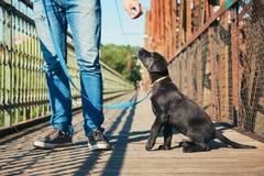Περίπατος πρωινού με το σκυλί Στοκ Φωτογραφίες