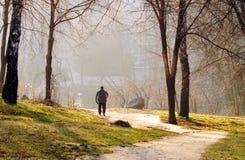 Περίπατος πρωινού στο πάρκο με ένα σκυλί ηλιόλουστο ημερησίως άνοιξη Στοκ φωτογραφία με δικαίωμα ελεύθερης χρήσης