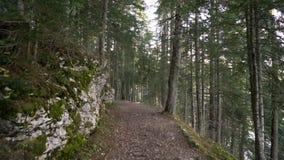 Περίπατος πρωινού το κομψό δασικό φθινόπωρο στα βουνά απόθεμα βίντεο