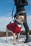 περίπατος σκυλιών Στοκ εικόνες με δικαίωμα ελεύθερης χρήσης