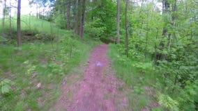 Περίπατος στις δασικές διαδρομές στην ηλιόλουστη θερινή ημέρα απόθεμα βίντεο