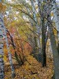 Περίπατος στο δάσος φθινοπώρου Στοκ Φωτογραφία