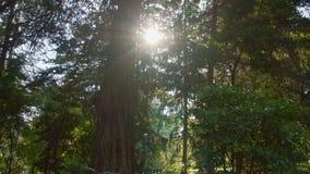 Περίπατος στο ηλιόλουστο δάσος απόθεμα βίντεο