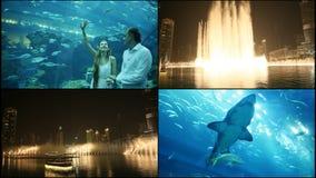 Περίπατος τύπων και κοριτσιών σε ένα υποβρύχιο ενυδρείο Η πηγή του Ντουμπάι στη νύχτα απόθεμα βίντεο