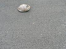 Περίπατος χελωνών στο σκυρόδεμα ασφάλτου Στοκ Εικόνες