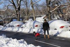 Περίπατος Central Park σκυλιών Στοκ εικόνες με δικαίωμα ελεύθερης χρήσης