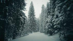 Περίπατος Steadicam κατά μήκος του χειμερινού δασικού δρόμου στο μειωμένο χιόνι απόθεμα βίντεο