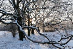 Περίπλοκα αναμειγμένοι κλάδοι δέντρων Στοκ Φωτογραφία