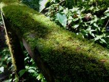 Περίφραξη με το βρύο Ecoturismo, οικοτουρισμός στη Κόστα Ρίκα στοκ εικόνες