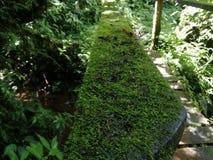 Περίφραξη με το βρύο Ecoturismo, οικοτουρισμός στη Κόστα Ρίκα στοκ φωτογραφία με δικαίωμα ελεύθερης χρήσης
