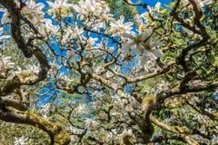 Περίληψη δέντρων τουλιπών στοκ εικόνες με δικαίωμα ελεύθερης χρήσης