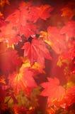 Περίληψη δενδρολογικών κήπων Westonbirt Στοκ Εικόνες
