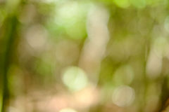 Περίληψη Θαμπάδα υποβάθρου στους πράσινους τόνους Στοκ εικόνα με δικαίωμα ελεύθερης χρήσης