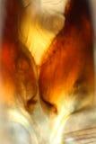 Περίληψη, μικρογράφημα πόλωσης των μερών μυγών γερανών Στοκ Εικόνα