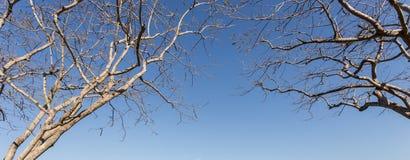 Περίληψη του κλάδου δέντρων χωρίς φύλλο στο μπλε ουρανό Στοκ εικόνα με δικαίωμα ελεύθερης χρήσης