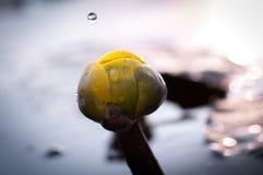 Περίληψη των πτώσεων και των κυματισμών νερού στοκ εικόνα