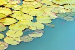 Περίληψη Waterlily Στοκ εικόνα με δικαίωμα ελεύθερης χρήσης