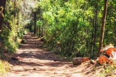 Περιβαλλοντικά προστατευόμενη περιοχή βιόσφαιρας πεταλούδων μοναρχών, Michoacan, Μεξικό Στοκ εικόνες με δικαίωμα ελεύθερης χρήσης