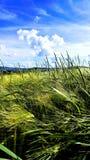 Περιβαλλοντικά όνειρα Στοκ Εικόνες