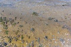 Περιβαλλοντική φύση ρύπανσης νερού αποβλήτων Υπόβαθρο βρώμικου και νερού φυσαλίδων Έννοια ρύπανσης των υδάτων στάσιμο ύδωρ Στοκ φωτογραφία με δικαίωμα ελεύθερης χρήσης