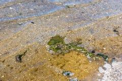 Περιβαλλοντική φύση ρύπανσης νερού αποβλήτων Υπόβαθρο βρώμικου και νερού φυσαλίδων Έννοια ρύπανσης των υδάτων στάσιμο ύδωρ Στοκ Εικόνες