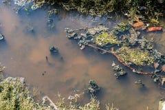 Περιβαλλοντική φύση ρύπανσης νερού αποβλήτων Υπόβαθρο βρώμικου και νερού φυσαλίδων Έννοια ρύπανσης των υδάτων Στοκ Εικόνες
