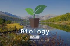 Περιβαλλοντική έννοια φύσης συντήρησης επιστήμης της βιολογίας Στοκ Φωτογραφία