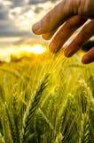 Περιβαλλοντική προσοχή στοκ εικόνες με δικαίωμα ελεύθερης χρήσης