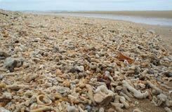 Περιβαλλοντική ρύπανση: Παραλία που συσσωρεύεται με τα νεκρά κοράλλια από το μεγάλο σκόπελο εμποδίων Στοκ Φωτογραφίες