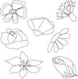 περιγράψτε τα λουλούδι&al Στοκ φωτογραφία με δικαίωμα ελεύθερης χρήσης