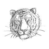 Περιγραμματική τίγρη doodle Στοκ φωτογραφία με δικαίωμα ελεύθερης χρήσης