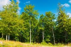 Περιθώριο του δάσους οξιών στοκ φωτογραφίες