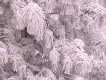 Περιθώριο χιονιού στοκ φωτογραφία