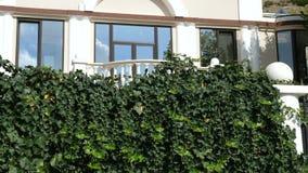 Περικαλύμματα ελίκων Hedera γύρω από το μπαλκόνι του εξοχικού σπιτιού απόθεμα βίντεο