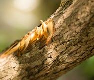 Περικοπές με ένα τσεκούρι στο φλοιό ενός δέντρου Στοκ Φωτογραφία