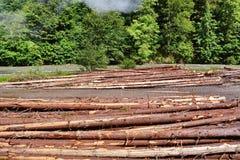 Περικοπή δέντρων στοκ εικόνα με δικαίωμα ελεύθερης χρήσης