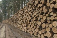 Περικοπή και συσσωρευμένη ξυλεία πεύκων στο πράσινο δάσος Στοκ εικόνα με δικαίωμα ελεύθερης χρήσης