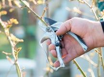 Περικοπή κηπουρών χεριών οι θάμνοι με το τέμνον εργαλείο Στοκ φωτογραφία με δικαίωμα ελεύθερης χρήσης