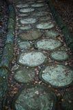 Περικοπή σύστασης του δέντρου Το κολόβωμα στο έδαφος καλύπτεται με τις βελόνες και τα φύλλα πεύκων στοκ εικόνα με δικαίωμα ελεύθερης χρήσης