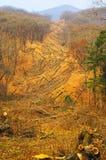 περικοπή του δάσους Στοκ εικόνες με δικαίωμα ελεύθερης χρήσης
