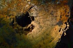 περικόψτε το δέντρο Στοκ Φωτογραφία