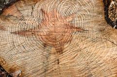 Περιορίστε ένα δέντρο με έναν πυρήνα με μορφή ενός αστεριού του Δαυίδ Ξύλινη ανασκόπηση στοκ εικόνες