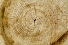 Περιορίστε ένα δέντρο με τα προσωρινά δαχτυλίδια Η σύσταση του φυσικού ξύλου στοκ εικόνες με δικαίωμα ελεύθερης χρήσης