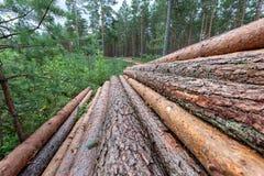περιορίστε τους κορμούς δέντρων woodlog στο δάσος στους σωρούς στοκ φωτογραφία με δικαίωμα ελεύθερης χρήσης