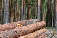 περιορίστε τους κορμούς δέντρων woodlog στο δάσος στους σωρούς στοκ φωτογραφίες με δικαίωμα ελεύθερης χρήσης