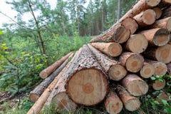 περιορίστε τους κορμούς δέντρων woodlog στο δάσος στους σωρούς στοκ εικόνες με δικαίωμα ελεύθερης χρήσης