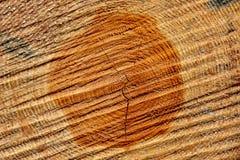 περιορίστε τους κορμούς δέντρων woodlog στο δάσος στους σωρούς στοκ φωτογραφίες