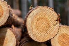 περιορίστε τους κορμούς δέντρων woodlog στο δάσος στους σωρούς στοκ εικόνες