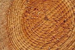 περιορίστε τους κορμούς δέντρων woodlog στο δάσος στους σωρούς στοκ εικόνα