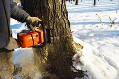 Περιορίστε το δέντρο με ένα αλυσιδοπρίονο στοκ φωτογραφία με δικαίωμα ελεύθερης χρήσης